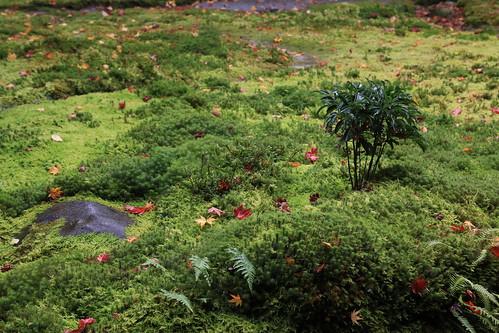 Autumn Rurikouin 瑠璃光院