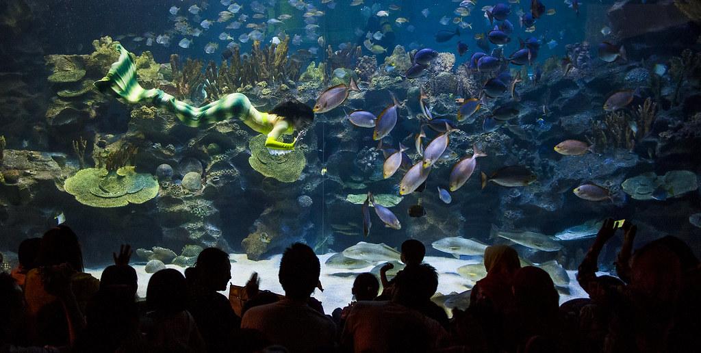 ... Wazir Mermaid Entertain Visitors at Aquaria KLCC, December 9th 2012