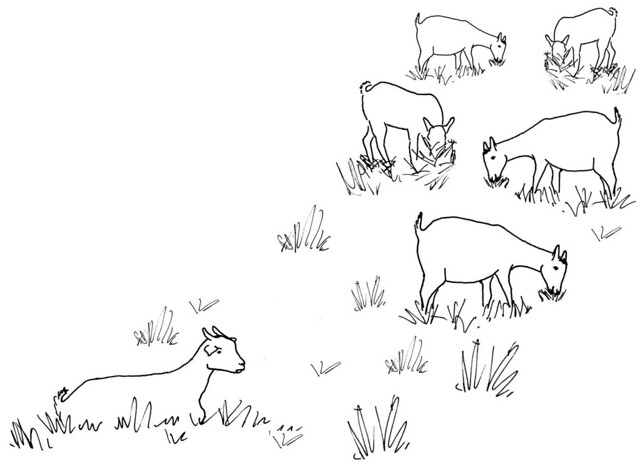 Line Drawing Of A Sick Goat Seperated From Herd Flickr