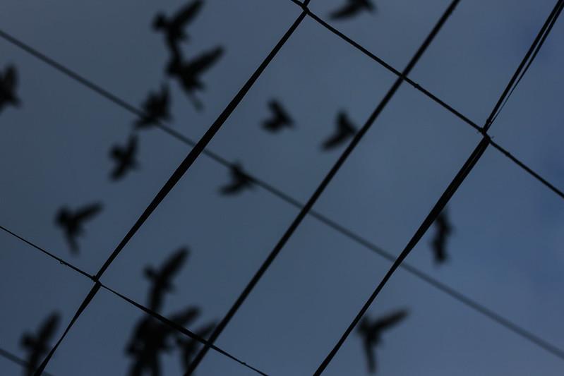 matinal sky & birds