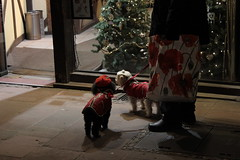 Ohh the little christmas dogs