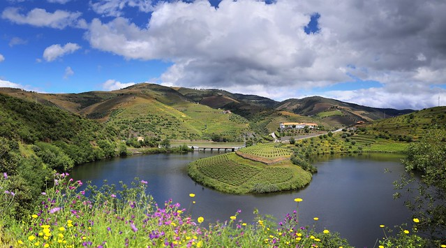 The winding Tedo river surrounded by terraced vineyards