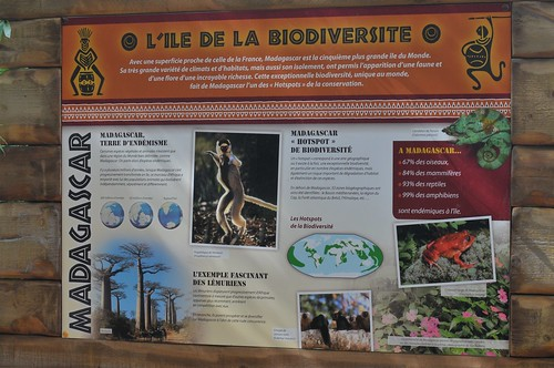 L'île des lémuriens