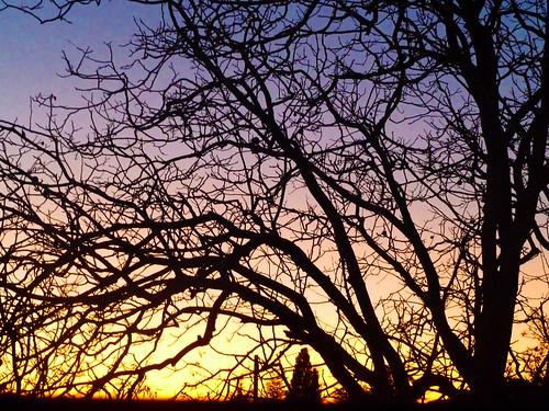 sunset sky tree alberi tramonto colours albero colori