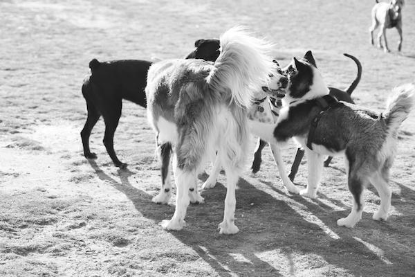jaxharmon_dogpark_22