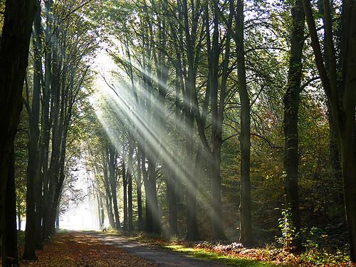 autumn fall sunrise sunbeam blinkagain bestofblinkwinners blinksuperstars bestevercompetitiongroup