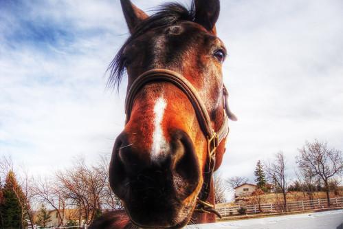 イケ馬面 Grazing Horse