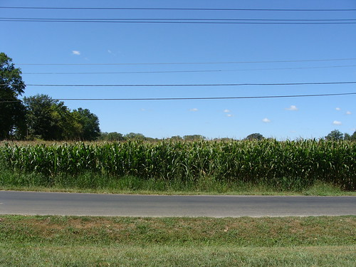 Corn Field (Mascoutah)
