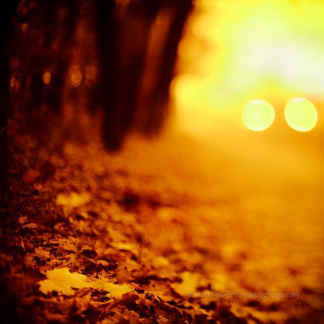 Morning Lights, Hungary