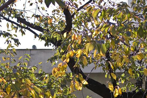 秋の終わり (2)