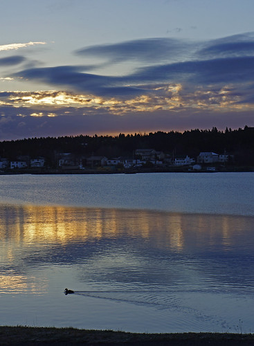 autumn sunset fall sunrise americanblackduck anasrubripes bayroberts newfoundlandandlabrador fallinlovewithbayrobertsinautumn