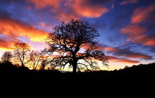 uk november blue trees light sunset sky orange sun black tree silhouette southwales clouds landscape lowlight nikon dramatic bluesky cotswolds gloucestershire stroud bisley d90 eastcombe