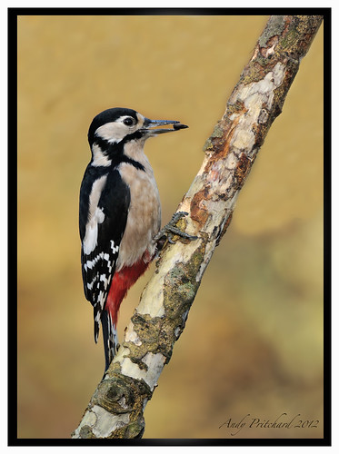 Woody with Seed by Andy Pritchard - Barrowford