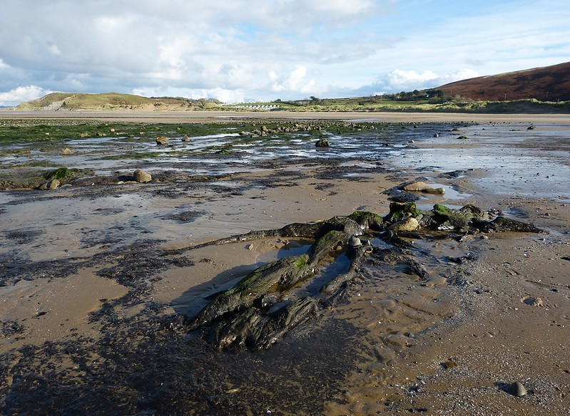 29018 - Submerged Forest, Broughton Bay