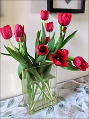 Thanksgiving tulips 1