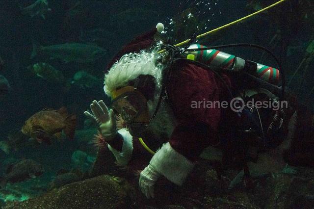 Vancouver Aquarium Luminescence/Scuba Santa