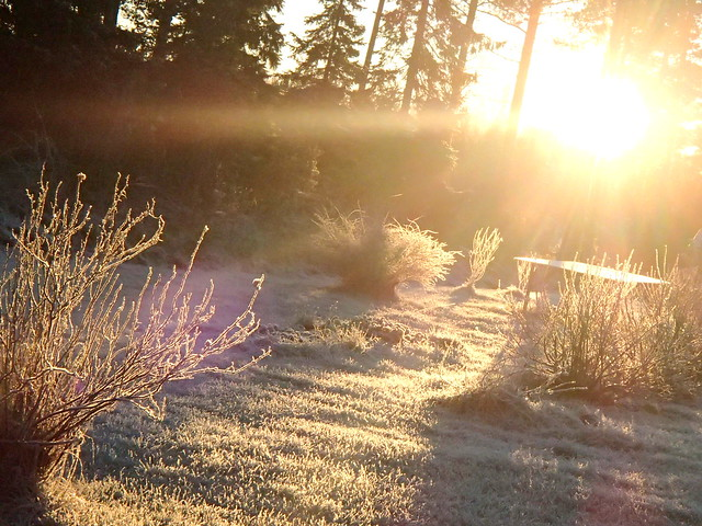 lumi kimalsi söpösti