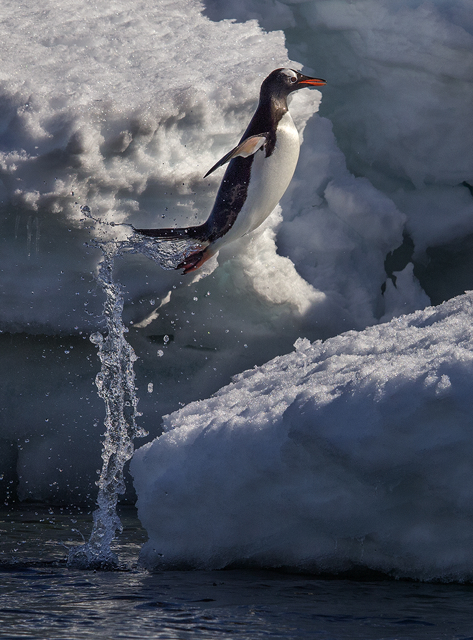 Olympus Visionary Jay Dickman Antarctica Penguin