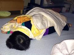 お昼寝とらちゃん 2012/12/1