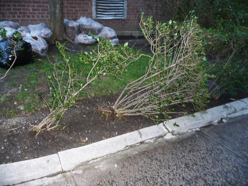Hurricane Sandy Damage