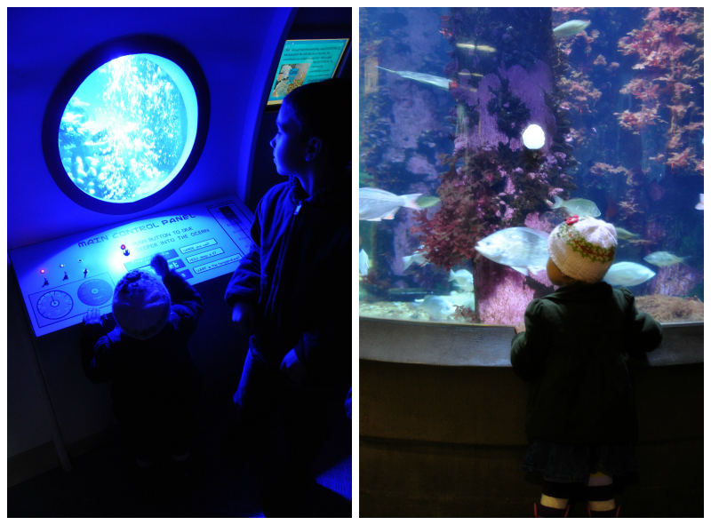 OR Coast Aquarium (1)