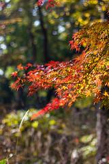 Nature reserve Tokyo