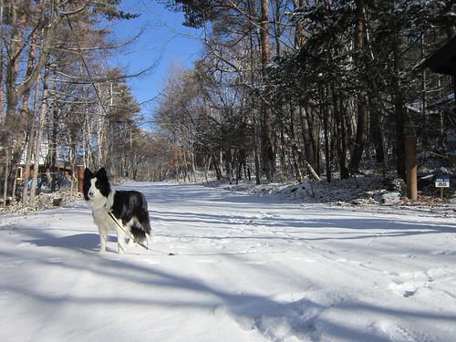 散歩道はもう雪景色 2012年12月3日9:30 by Poran111