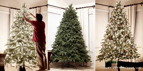 christmas tree // 2012