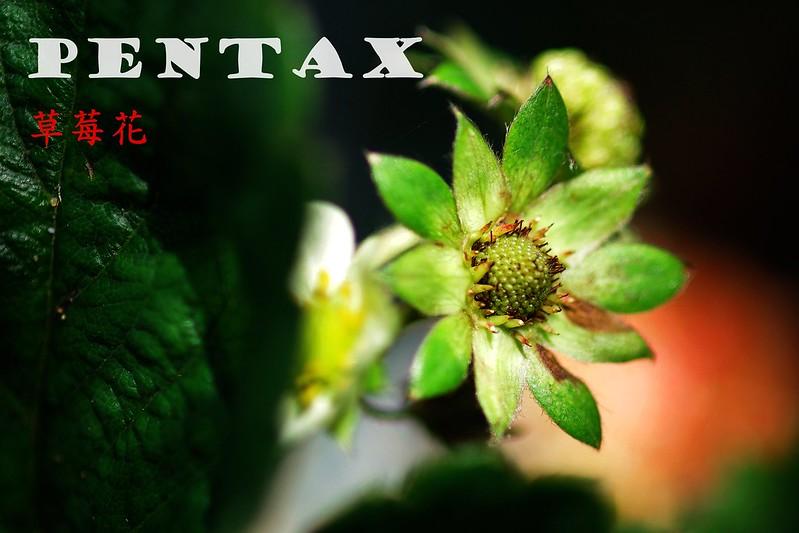 讓更多人記得PENTAX這6個字
