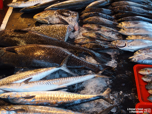 豐富的魚貨