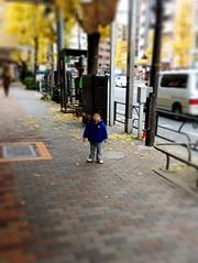 朝散歩とらちゃん 2012/12/19