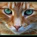 R.I.P Beloved Jake. July 15 1999 - Dec 18 2012