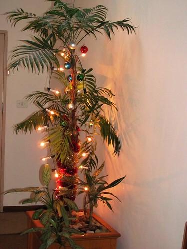 Julepalmen