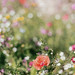 noch mehr Sommerblumen by glasseyes view