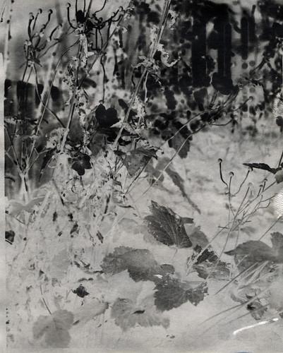 Kodak linagraph - negative