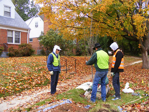 Casey Trees Volunteer Planting, Seminary Road