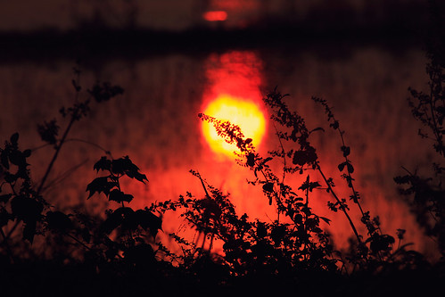 [フリー画像素材] 自然風景, 朝焼け・夕焼け, 草原・草, 太陽 ID:201211122000
