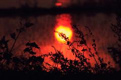 [Free Images] Nature, Sunrise / Sunset, Grassland / Grass, Sun ID:201211122000