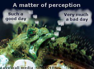 sea-shore-antics-perception