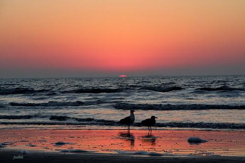 ocean morning sea seagulls nature sunrise newjersey sand waves horizon wildwood seafoam