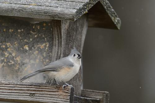 Bird_46386.jpg
