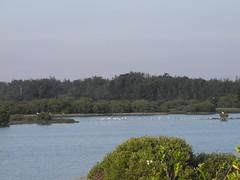 堤防一邊的溼地風光。
