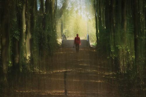 autumn netherlands movement rotterdam herfst icm redcoat beweging rodejas intentionalcameramovement schiebroeksepark