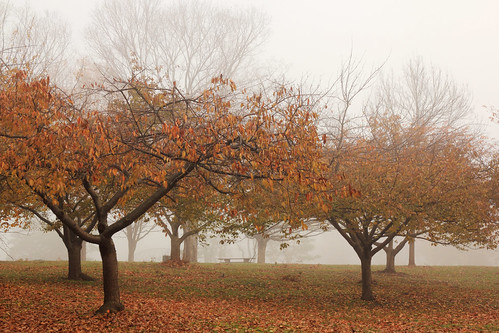 park autumn mist tree fall fog newjersey foliage rahway rahwayriverpark