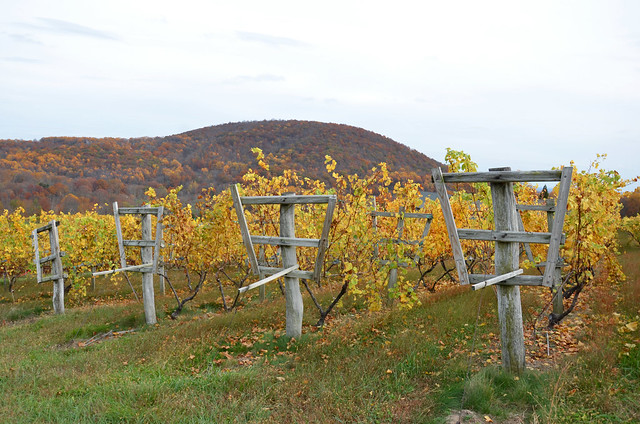 linden vineyards