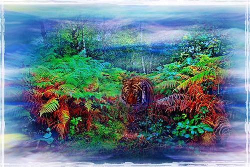A woodland dream  -  Une reve boise  -  Un sogno bosco  -  Um sonho floresta  -  Un sueno bosque