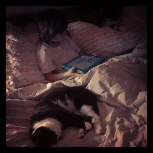 In our house sick children almost always wind up in our bed, accompanied by a cat or two. #child #sick #cats