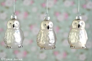 Pearlised owls