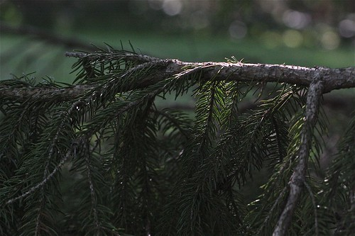Pine Tree State 02