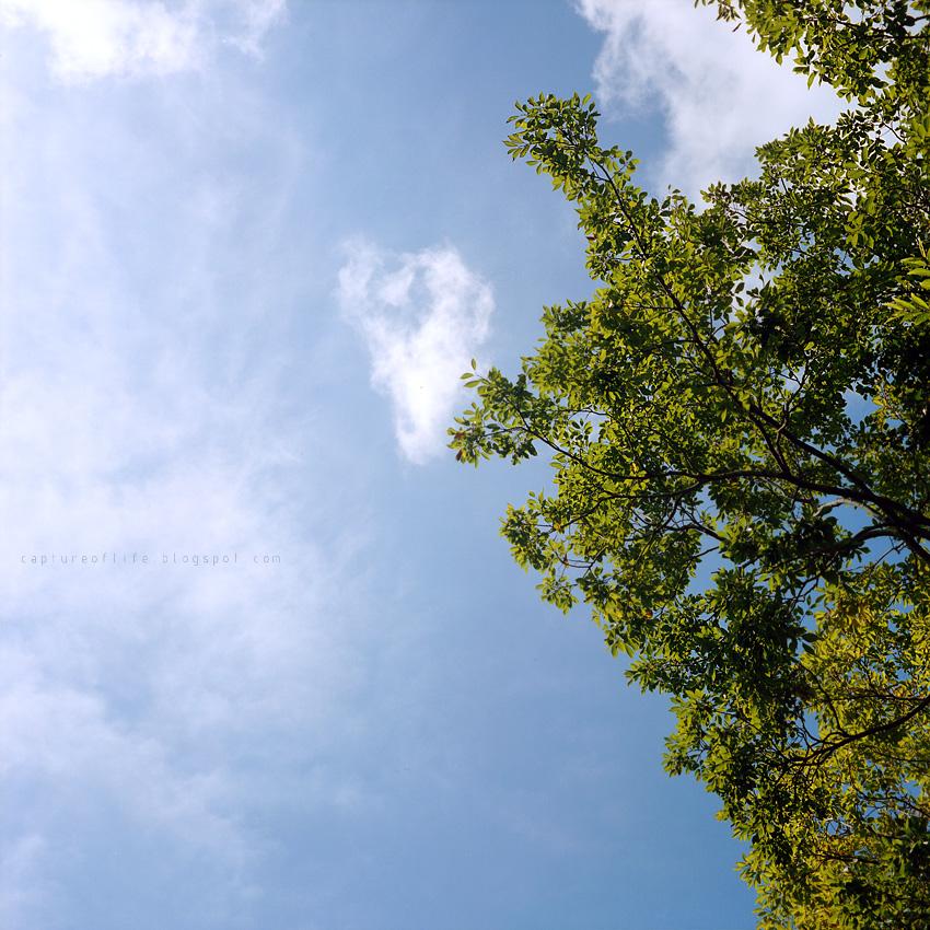 2012_0923_101000az_Portra400_RolleiflexT
